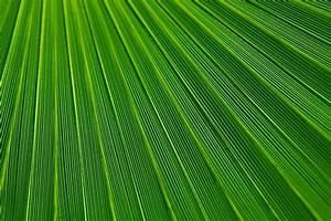 Wohnen In Grün : einrichten in erfrischendem gr n ~ Michelbontemps.com Haus und Dekorationen