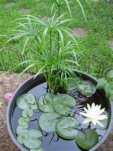 Jardin japonais : Quelles plantes et arbres pour un jardin zen