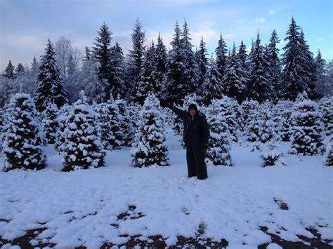 farmer brown s christmas tree farm 98223 arlington 12017