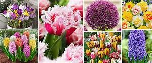 Wann Blühen Narzissen : im nu blumenzwiebeln pflanzen f r mehr informationen ber garten b ume und pflanzen ~ Eleganceandgraceweddings.com Haus und Dekorationen