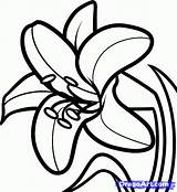 Lily Easter Draw Flower Drawing Lilies Outline Flowers Step Clipart Coloring Pages Lilly Dragoart Drawings Mexican Glass Designs Stargazer Az sketch template