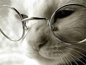 Süße Katzen mit Brillen 22 lustige Bilder für echte