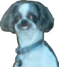 dog meme cursed dank dankmeme oof freetoedit