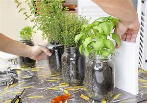 Ameisen Auf Der Terrasse : kr utergarten auf der terrasse so f hlen sich die ~ Lizthompson.info Haus und Dekorationen