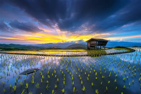 sunrise rice paddy hut terraces water mountain