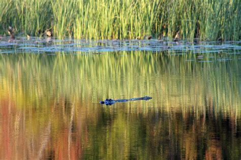 Camping At Three Rivers State Park On Lake Seminole