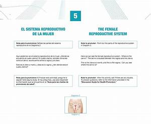 Diagram  Female Reproductive System Diagram Se 6 Answers