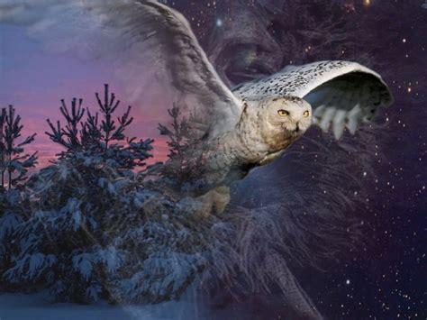 arriere plan bureau gratuit fonds d 39 écran animaux gt fonds d 39 écran oiseaux hiboux et