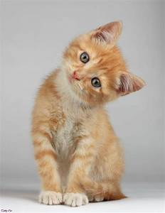 Image - Cute-orange-tabby-cats-brown-tabby-cat-orange-and ...