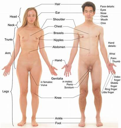 Human Sexual Dimorphism Vagina Female Male Labels