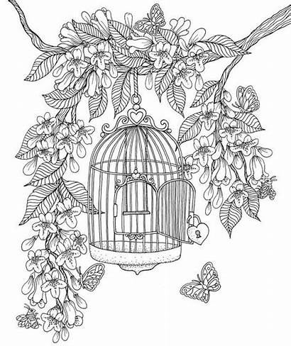 Coloring Pages Cage Bird Vk Adult раскраски