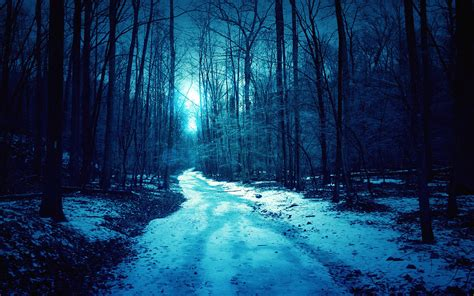 Winter Forest Night Wallpaper Picture » Outdoors Wallpaper