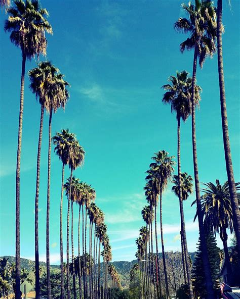 palm tree l palm trees in los angeles california palm tree lined street
