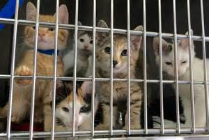 cat shelters florida wants to create spectacular legislation on how to