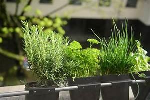 Kräuter Im Garten : kr uter im garten so bringen sie w rze in den garten gartenbau und landschaftsbau aus ~ Frokenaadalensverden.com Haus und Dekorationen