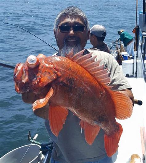 Emeryville Party Boat Fishing by Marin Coast And Sf Bay Fish Report Marin County