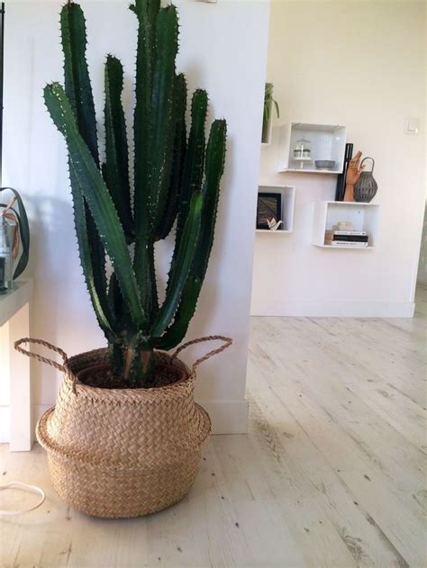 snob comme un pot de chambre cactus avec cache pot panier bloomingville nouveautés