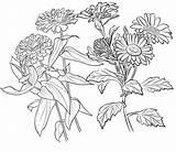 Coloring Zinnia Coloringpagesfortoddlers Enregistree Depuis Doghousemusic sketch template