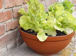 Salat Pflanzen Abstand : gem se f r balkon welche pflanzen sie wie anbauen k nnen ~ Markanthonyermac.com Haus und Dekorationen
