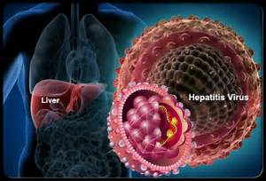 ... Medicine - 27.11.2014 12:21 AM - Categories: Hepatitis - No Comments Hepatitis