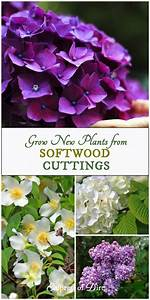 Grow New Plants From Softwood Cuttings
