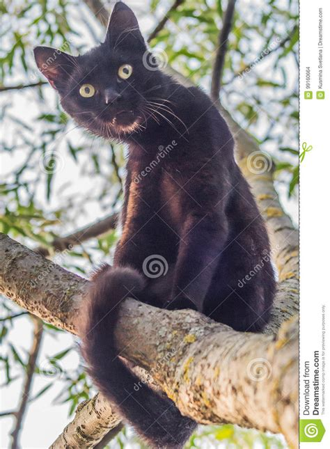 cat branch tree agile cats climb preview
