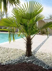 Comment entretenir un palmier for Palmier jardin