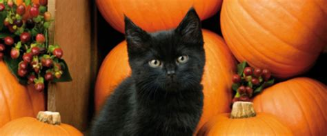 How Black Cat Stigmas And Superstitions Still Effect Us