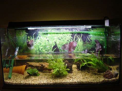 aquarium reconverti bricolages montages installations forums orchidees fr
