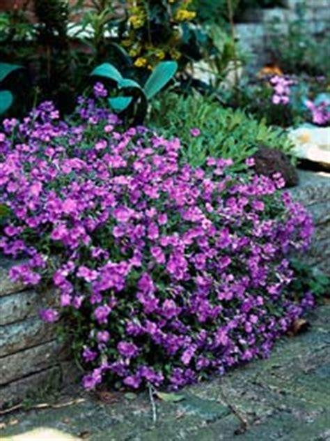 plantes de bureau sans soleil talus soleil tout