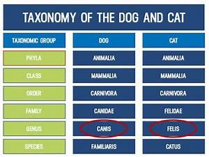 Raw Dog Feeding Chart Raw Feeding Dogs Is Your Raw Diet Species Appropriate