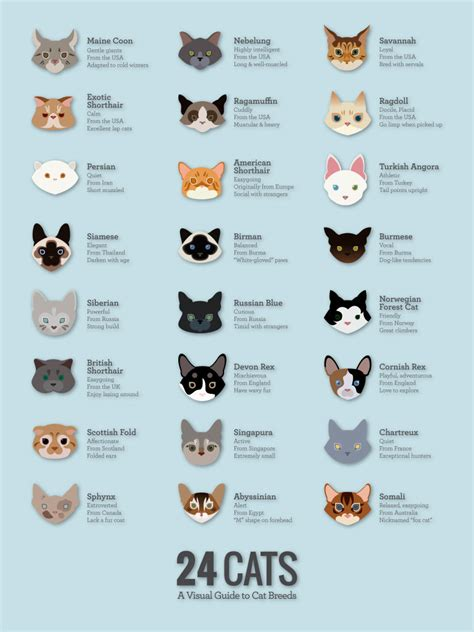 how do i know what breed my cat is 5 cat and dog lovers