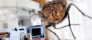 Comment Se Débarrasser Des Souris Dans Une Maison : quelques astuces naturelles pour repousser les mouches en t ~ Nature-et-papiers.com Idées de Décoration