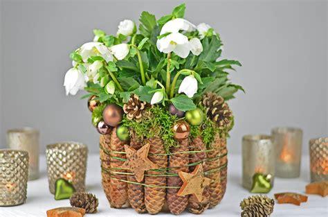 weihnachtsstern pflanze deko weihnachts winterdeko how to christrose weihnachtsstern