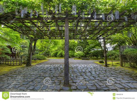 wisteria in bloom at portland japanese garden path royalty