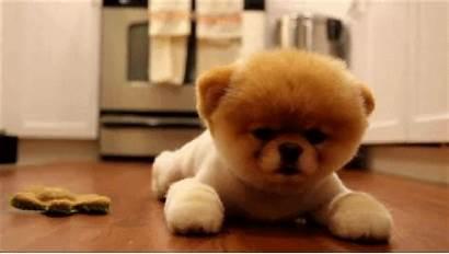 Puppy Gifs Cutest Ever Ll Puppies Mine