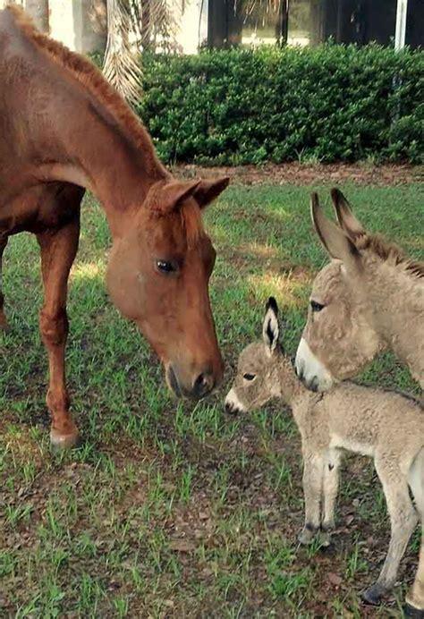 funny cute baby donkeys great inspire