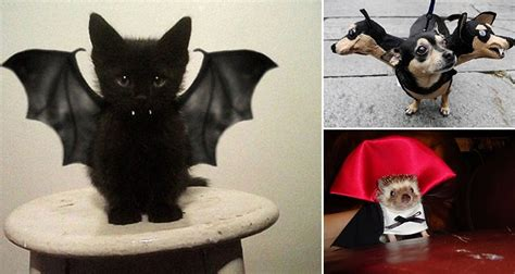 awesome halloween costumes  pets