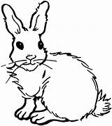 Rabbit Coloring Pages Bunny Animals Cute Drawing ارنب sketch template