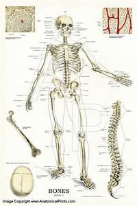 Bones - Plate 1