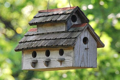 birdhouse building tips  resources