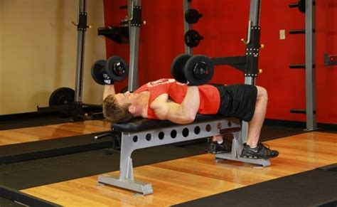 90 Pound Dumbbell Bench Press by Best Bodybuilding Workouts For Beginners Beginners