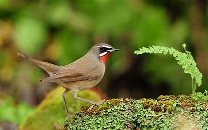 Birds Bird Wallpapers Fullscreen Forest Desktop Screen