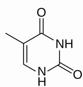Diagram Of Thymine