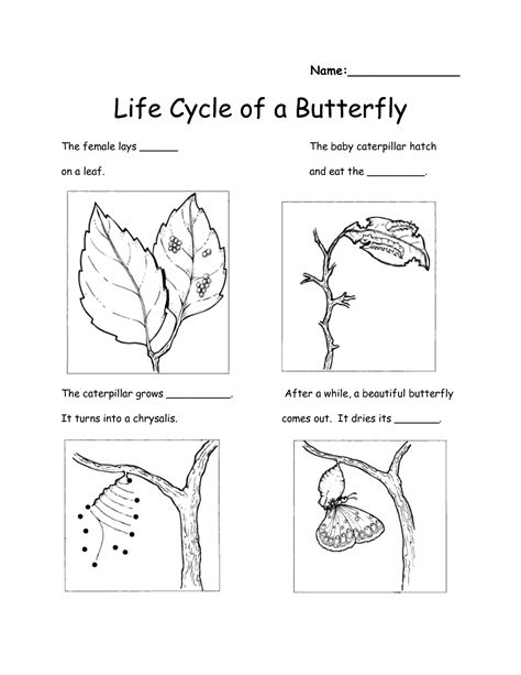 12 best images of free printable butterfly cycle