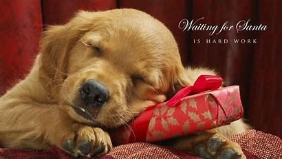 Christmas Dog Wallpapers Dogs Puppy Desktop Xmas