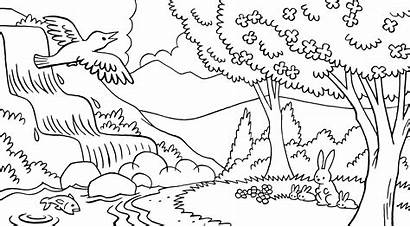 Nature Scene Forest Line Animals Library Waterfall