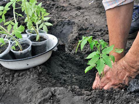 flowers for beginner gardeners flower gardening tips for beginners boldsky com