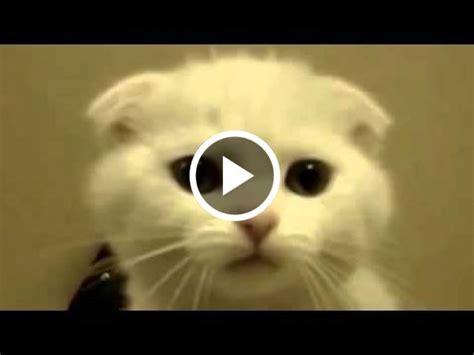 Funny And Weird Animals 2 Youtubehtml  Autos Weblog