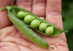 Peas - POD easy edible gardening